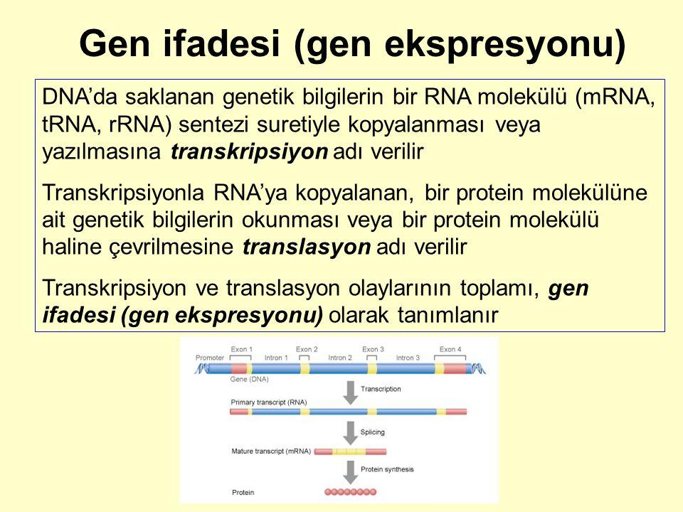 Gen ifadesi (gen ekspresyonu)