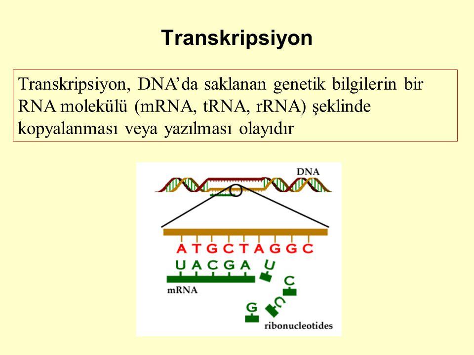 Transkripsiyon Transkripsiyon, DNA'da saklanan genetik bilgilerin bir RNA molekülü (mRNA, tRNA, rRNA) şeklinde kopyalanması veya yazılması olayıdır.