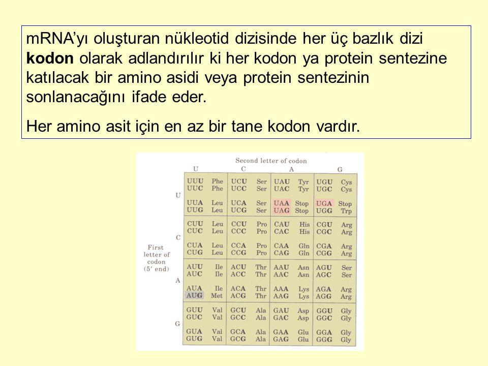 mRNA'yı oluşturan nükleotid dizisinde her üç bazlık dizi kodon olarak adlandırılır ki her kodon ya protein sentezine katılacak bir amino asidi veya protein sentezinin sonlanacağını ifade eder.