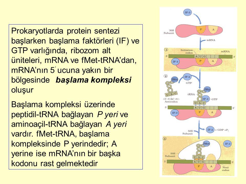 Prokaryotlarda protein sentezi başlarken başlama faktörleri (IF) ve GTP varlığında, ribozom alt üniteleri, mRNA ve fMet-tRNA'dan, mRNA'nın 5′ ucuna yakın bir bölgesinde başlama kompleksi oluşur