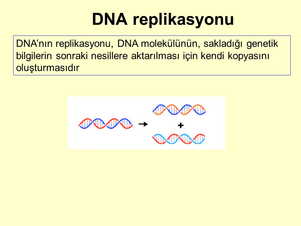 DNA replikasyonu