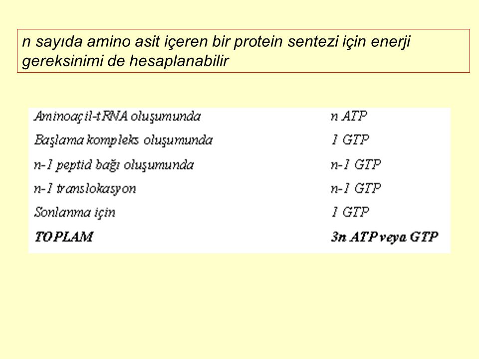 n sayıda amino asit içeren bir protein sentezi için enerji gereksinimi de hesaplanabilir