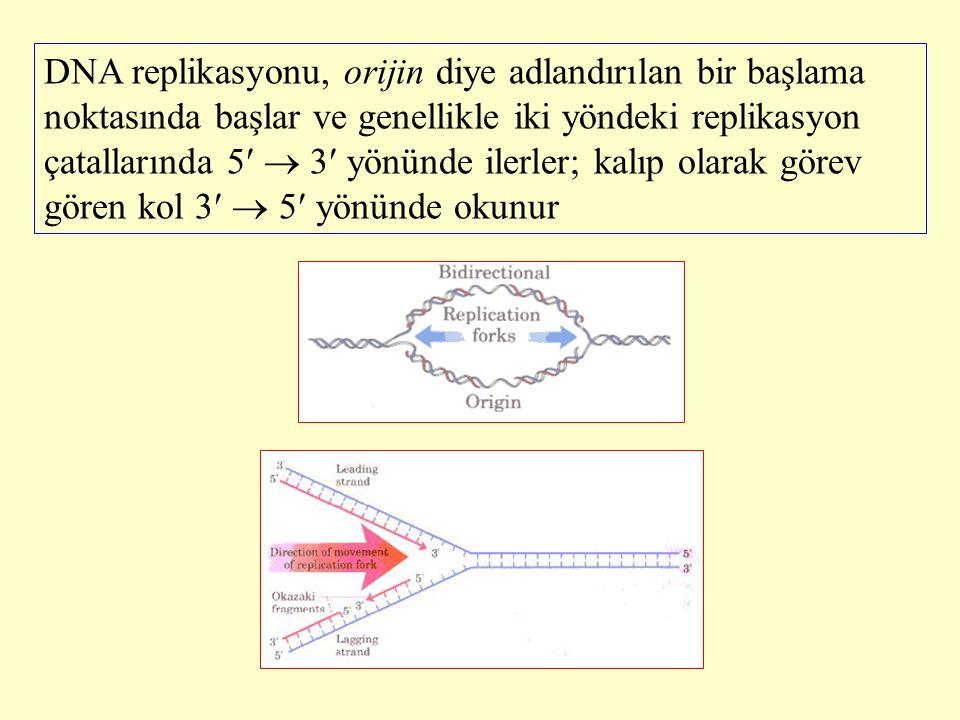 DNA replikasyonu, orijin diye adlandırılan bir başlama noktasında başlar ve genellikle iki yöndeki replikasyon çatallarında 5  3 yönünde ilerler; kalıp olarak görev gören kol 3  5 yönünde okunur