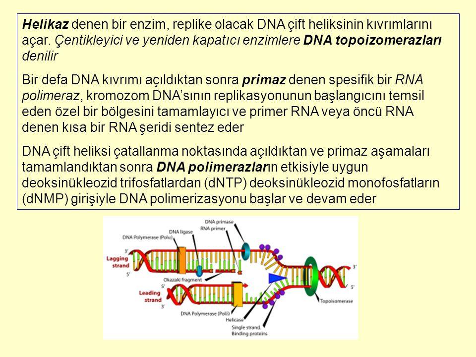 Helikaz denen bir enzim, replike olacak DNA çift heliksinin kıvrımlarını açar. Çentikleyici ve yeniden kapatıcı enzimlere DNA topoizomerazları denilir