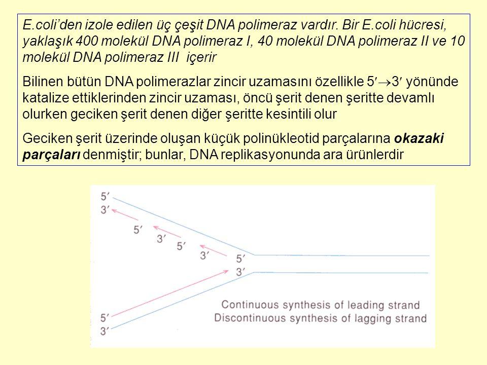 E. coli'den izole edilen üç çeşit DNA polimeraz vardır. Bir E