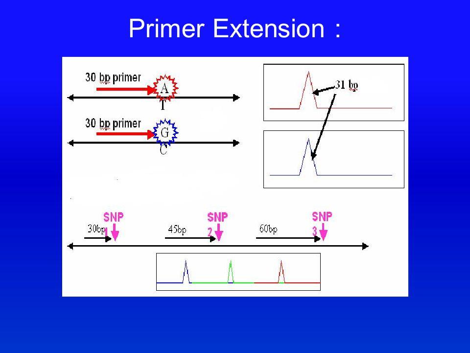 Primer Extension :