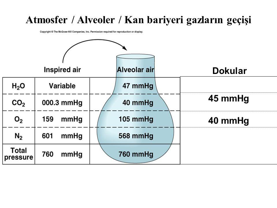 Atmosfer / Alveoler / Kan bariyeri gazların geçişi
