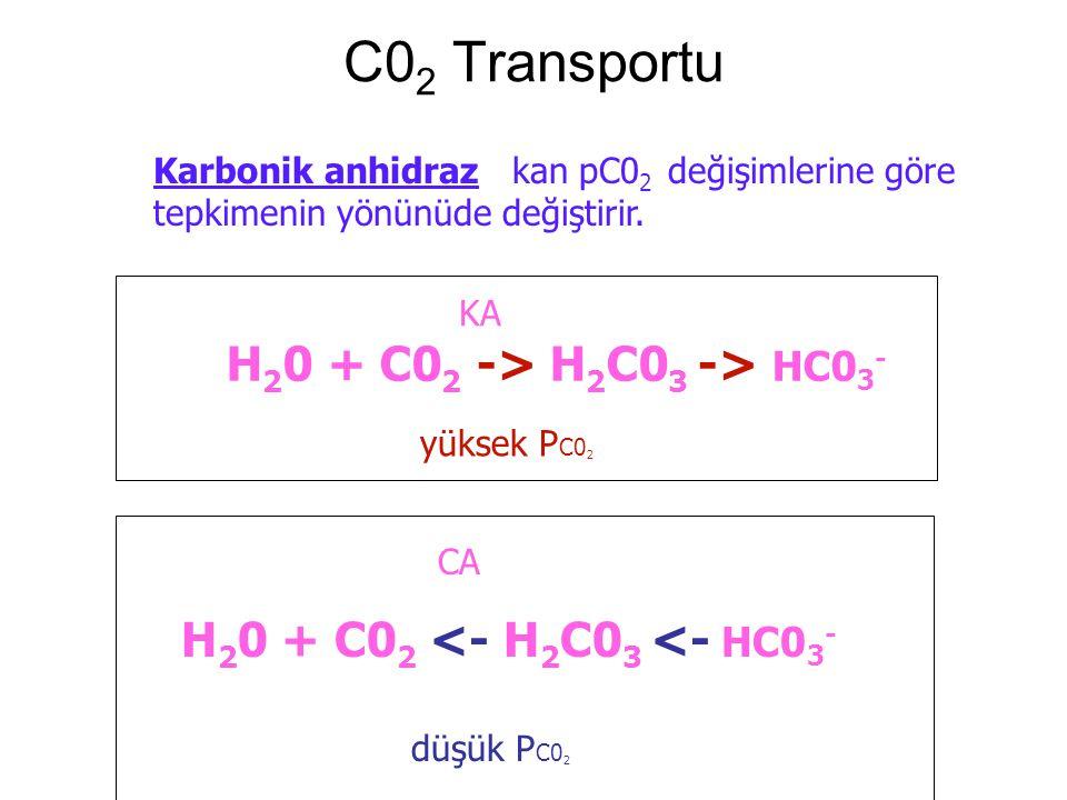 C02 Transportu H20 + C02 -> H2C03 -> HC03-
