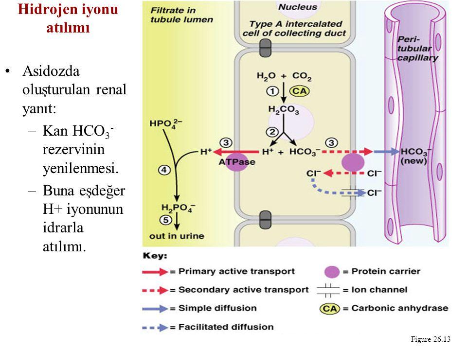 Hidrojen iyonu atılımı