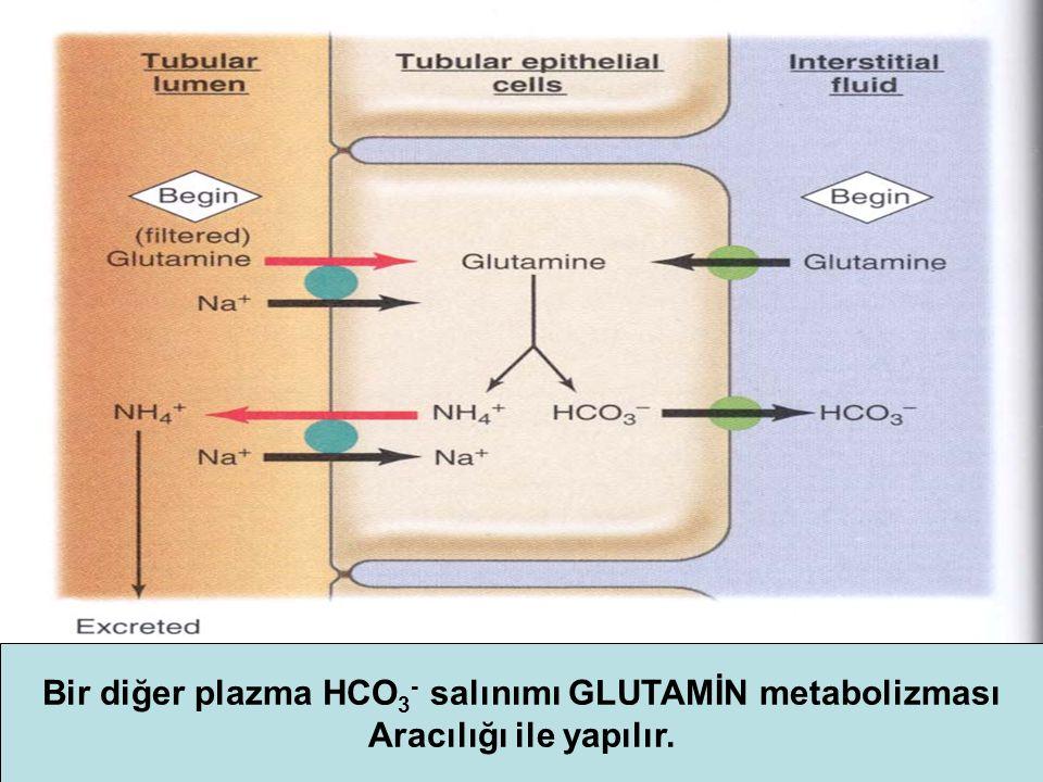 Bir diğer plazma HCO3- salınımı GLUTAMİN metabolizması
