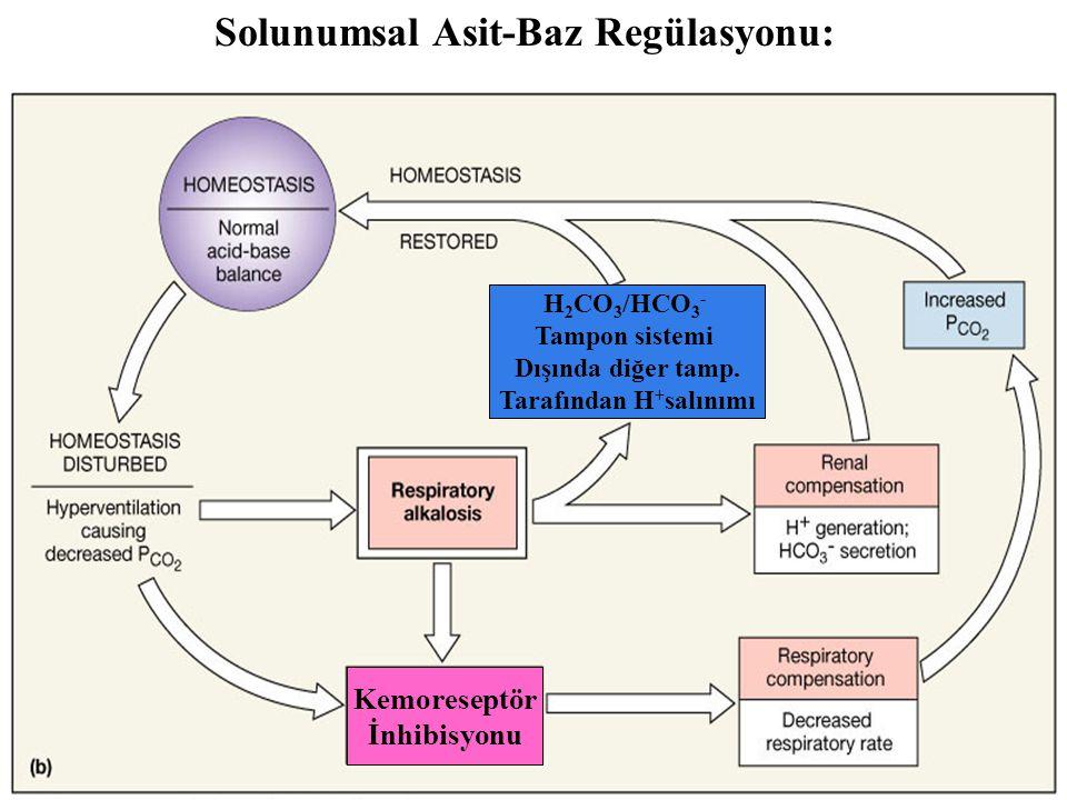 Solunumsal Asit-Baz Regülasyonu: