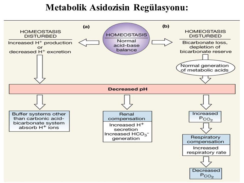 Metabolik Asidozisin Regülasyonu: