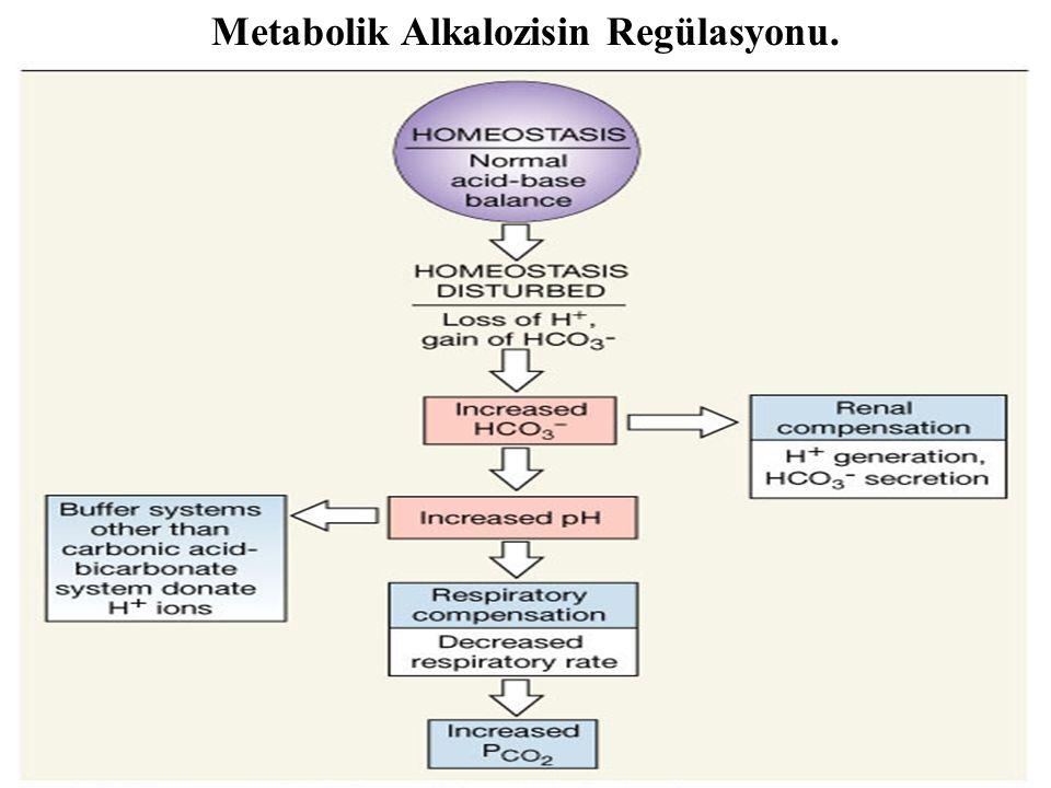 Metabolik Alkalozisin Regülasyonu.