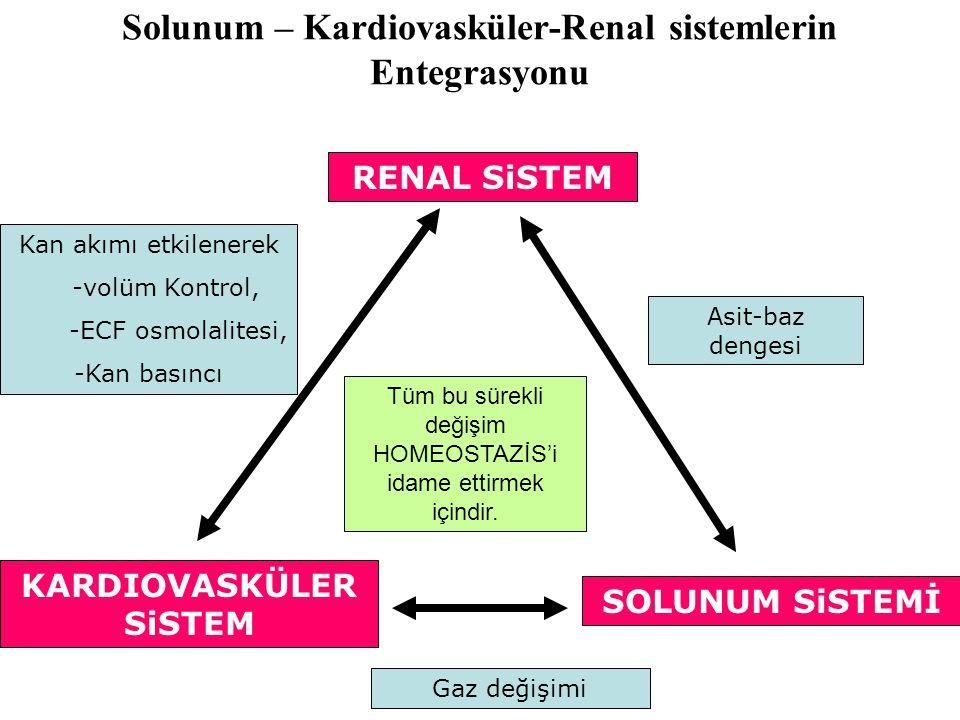 Solunum – Kardiovasküler-Renal sistemlerin Entegrasyonu