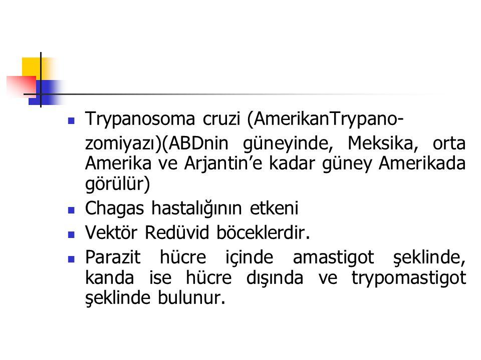 Trypanosoma cruzi (AmerikanTrypano-