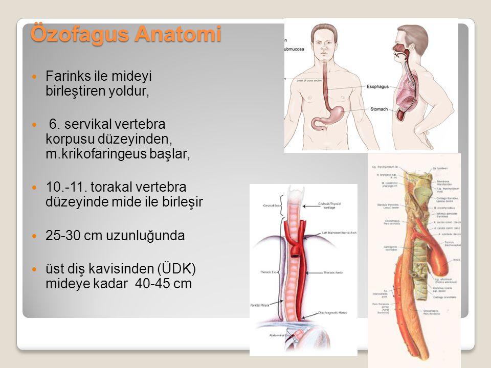 Özofagus Anatomi Farinks ile mideyi birleştiren yoldur,