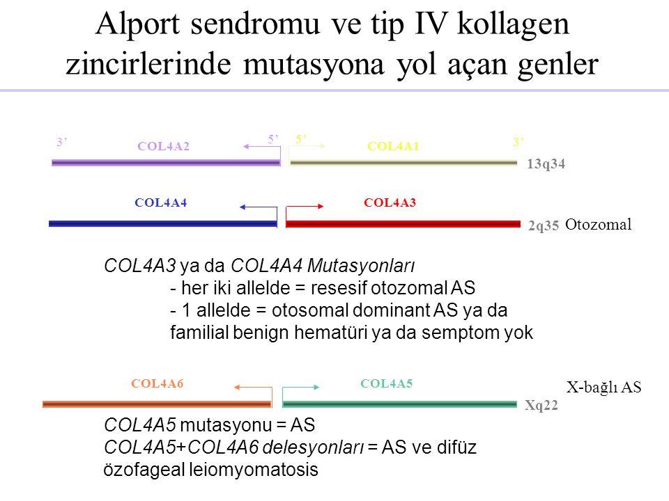 Alport sendromu ve tip IV kollagen zincirlerinde mutasyona yol açan genler
