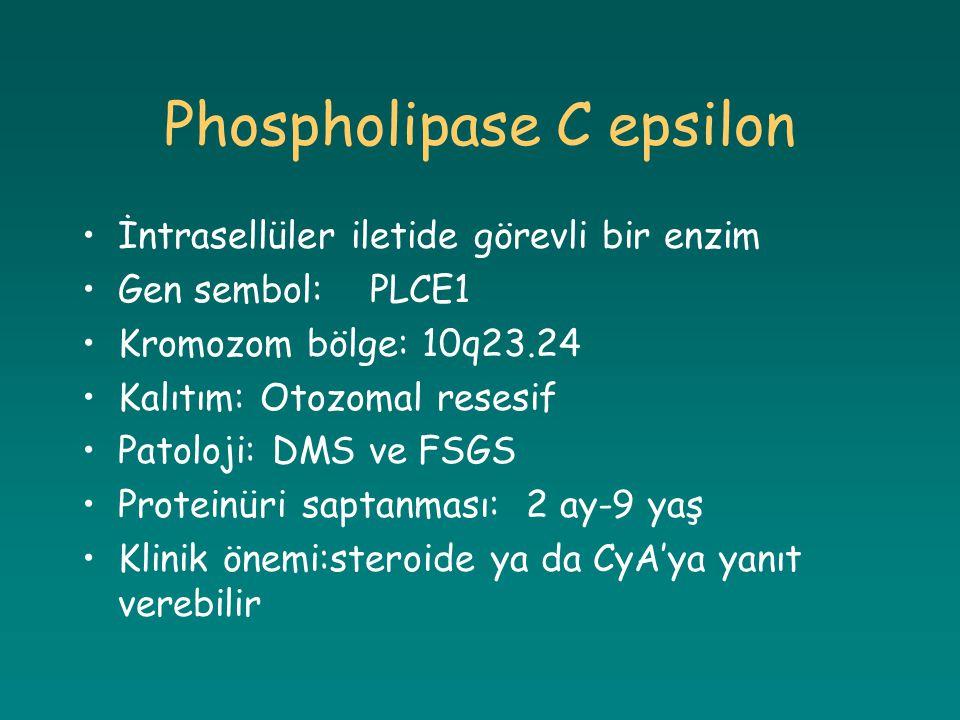 Phospholipase C epsilon