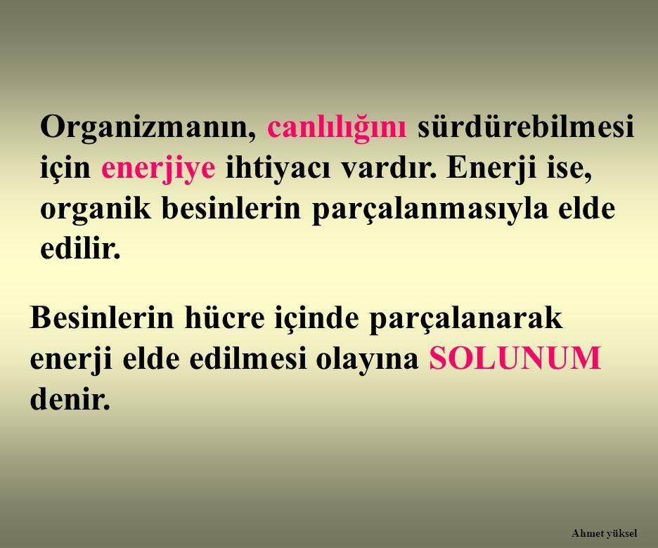 Organizmanın, canlılığını sürdürebilmesi için enerjiye ihtiyacı vardır