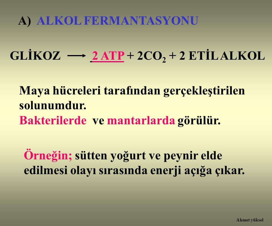 A) ALKOL FERMANTASYONU