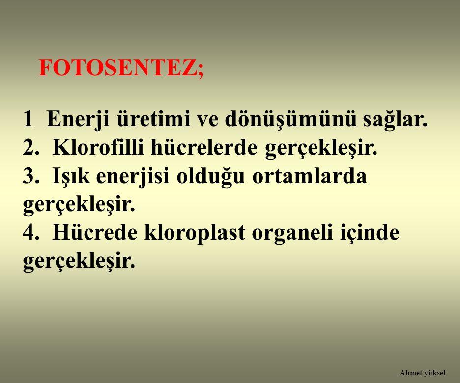 1 Enerji üretimi ve dönüşümünü sağlar.