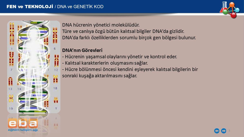 FEN ve TEKNOLOJİ / DNA ve GENETİK KOD