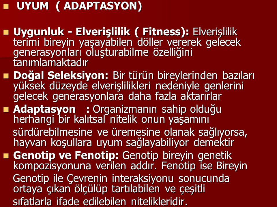 UYUM ( ADAPTASYON)