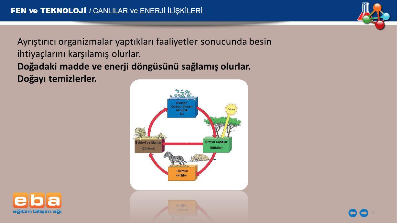 FEN ve TEKNOLOJİ / CANLILAR ve ENERJİ İLİŞKİLERİ