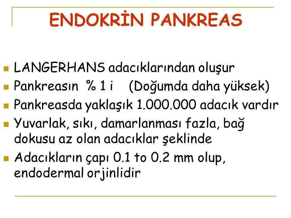 ENDOKRİN PANKREAS LANGERHANS adacıklarından oluşur