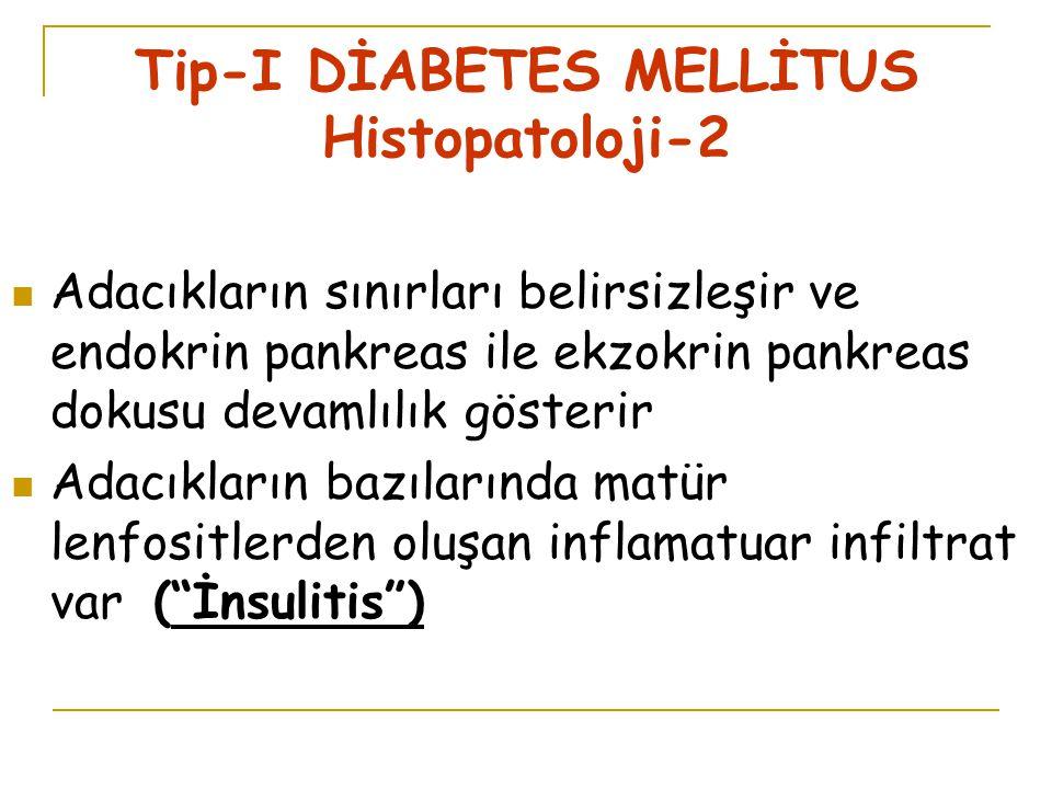 Tip-I DİABETES MELLİTUS Histopatoloji-2
