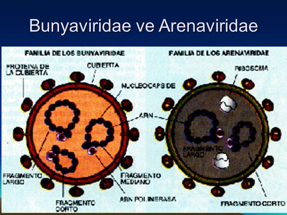 Bunyaviridae ve Arenaviridae