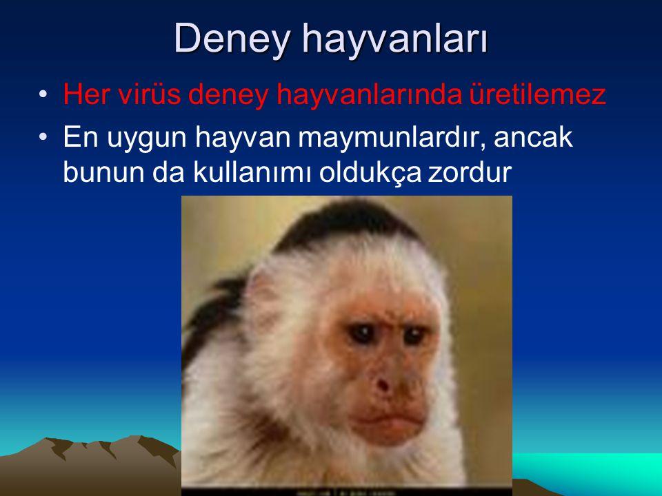 Deney hayvanları Her virüs deney hayvanlarında üretilemez