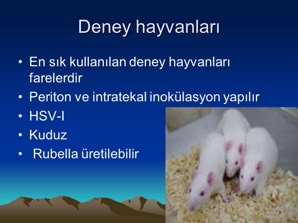 Deney hayvanları En sık kullanılan deney hayvanları farelerdir