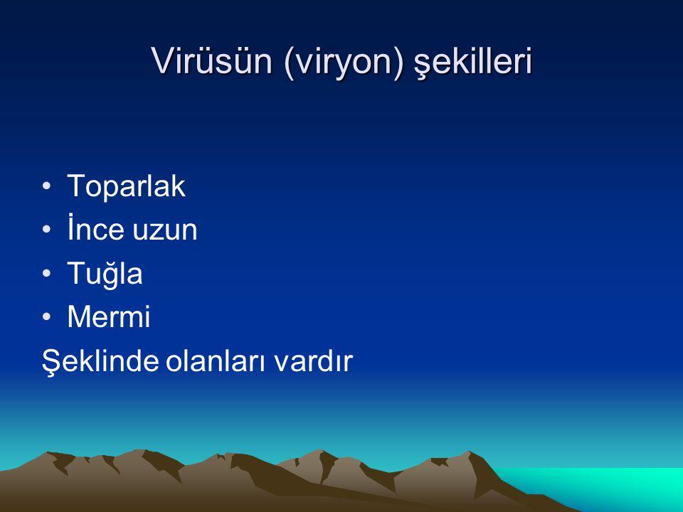 Virüsün (viryon) şekilleri