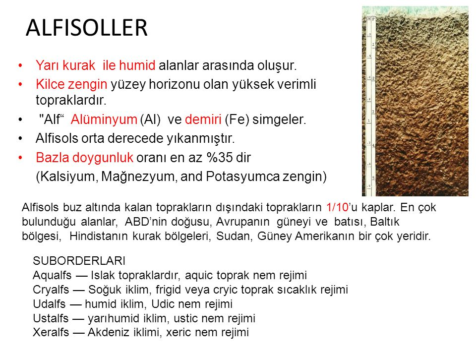 ALFISOLLER Yarı kurak ile humid alanlar arasında oluşur.
