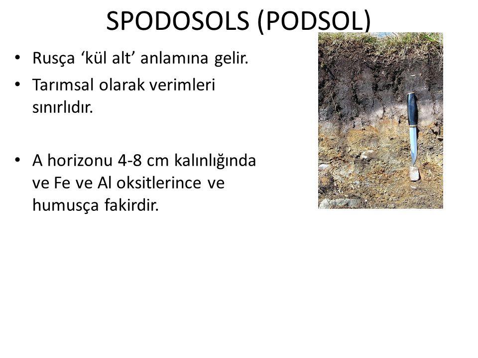 SPODOSOLS (PODSOL) Rusça 'kül alt' anlamına gelir.
