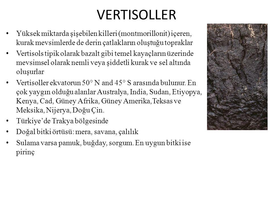 VERTISOLLER Yüksek miktarda şişebilen killeri (montmorillonit) içeren, kurak mevsimlerde de derin çatlakların oluştuğu topraklar.