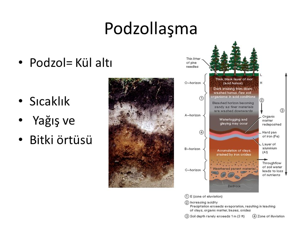 Podzollaşma Podzol= Kül altı Sıcaklık Yağış ve Bitki örtüsü