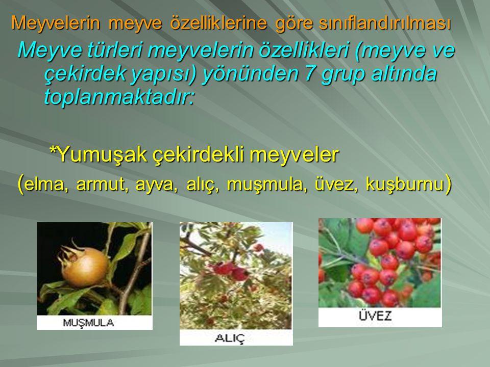 *Yumuşak çekirdekli meyveler