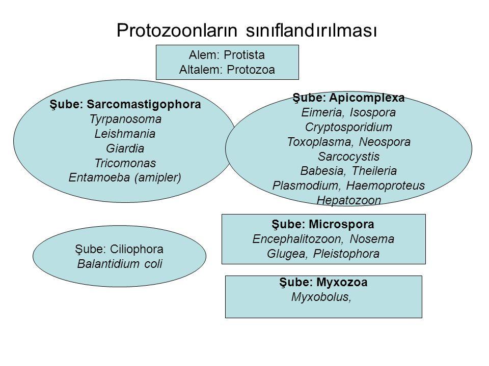 Protozoonların sınıflandırılması