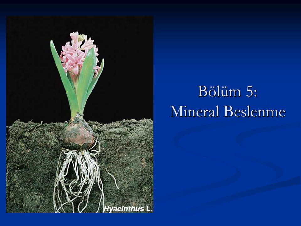 Bölüm 5: Mineral Beslenme