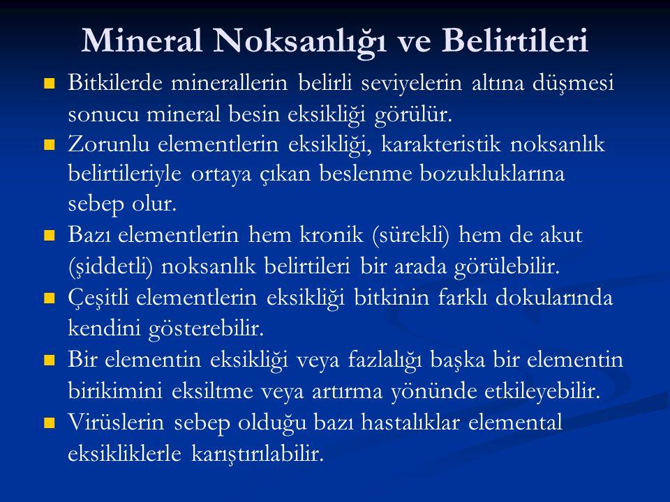 Mineral Noksanlığı ve Belirtileri