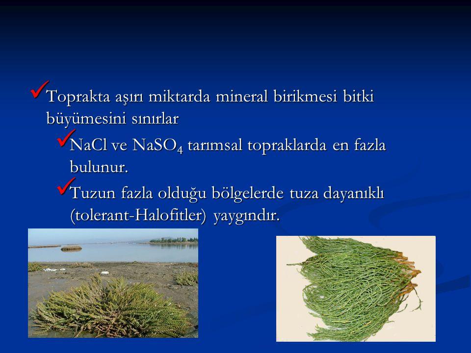 Toprakta aşırı miktarda mineral birikmesi bitki büyümesini sınırlar