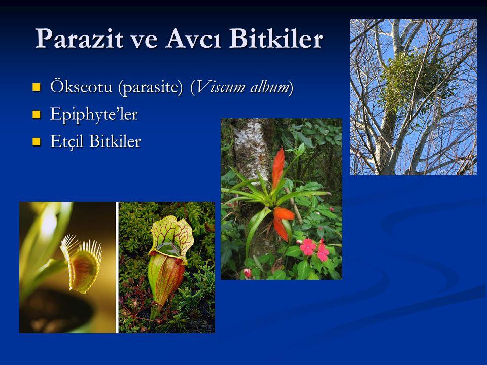 Parazit ve Avcı Bitkiler