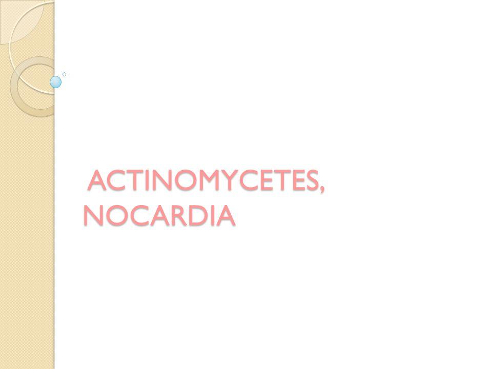 ACTINOMYCETES, NOCARDIA