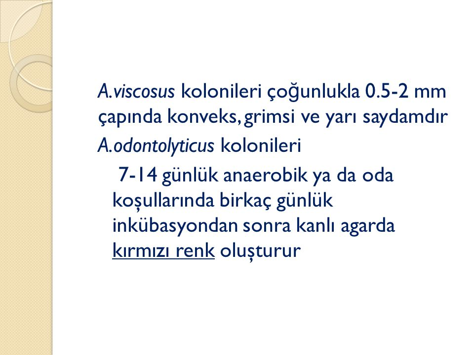 A. viscosus kolonileri çoğunlukla 0