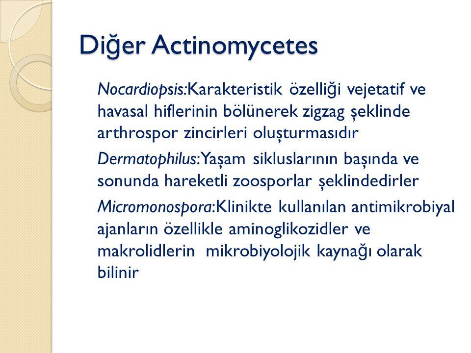 Diğer Actinomycetes