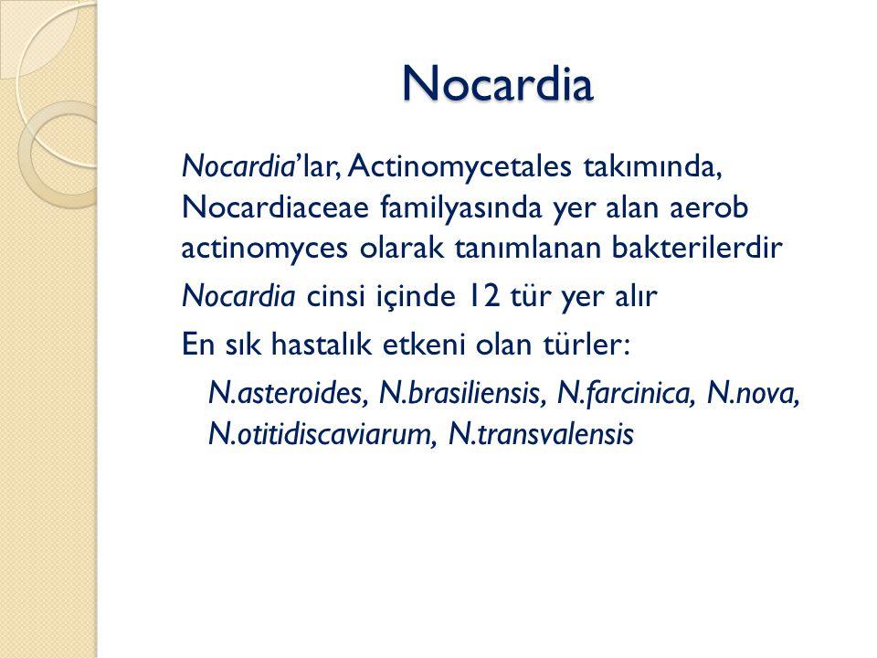 Nocardia Nocardia'lar, Actinomycetales takımında, Nocardiaceae familyasında yer alan aerob actinomyces olarak tanımlanan bakterilerdir.