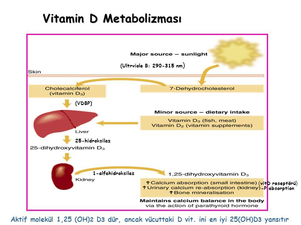 Vitamin D Metabolizması