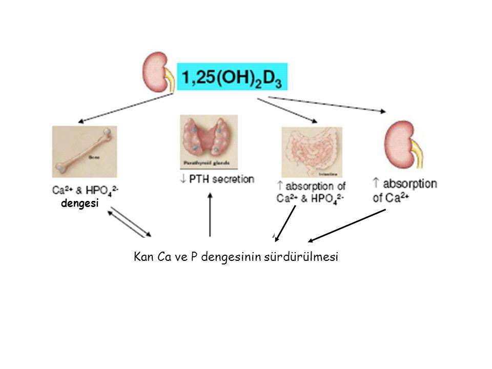 Kan Ca ve P dengesinin sürdürülmesi